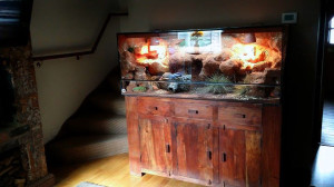 bearded dragon natural vivarium