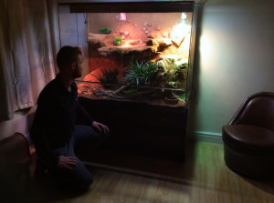 bearded-dragon-instalation
