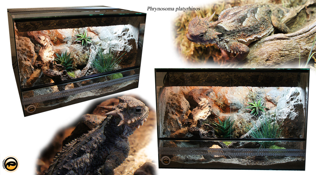 Desert-Horned-Lizard-vivarium