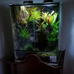 RAINFOREST VIVARIUM